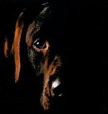 Собака-барабака: рассрочка от 1 мес.